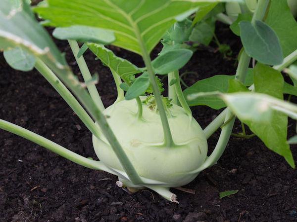 zena.pravda.sk/kalerab-zelenina-vitaminy